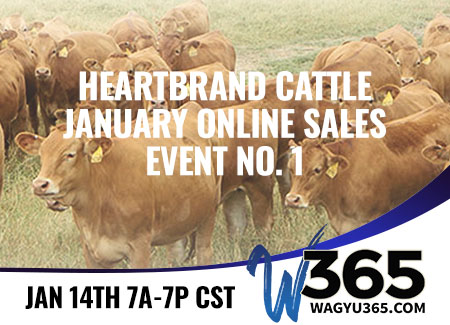 Heartbrand Cattle January Online Sales Event No. 1