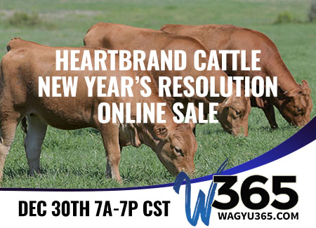 Heartbrand Cattle New Year's Resolution Online Sale
